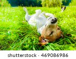 jack russell dog relaxing and... | Shutterstock . vector #469086986