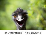 Young  Emu Bird Gazing At The...
