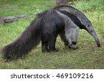 giant anteater  myrmecophaga... | Shutterstock . vector #469109216
