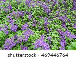 field with blossomed lilac... | Shutterstock . vector #469446764