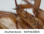 macro of cockroach insects of... | Shutterstock . vector #469463804