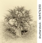 Small photo of Lonely old baobab tree (Adansonia digitata)) - Namibia, South-West Africa (stylized retro)