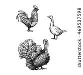 poultry. illustration of cock ... | Shutterstock .eps vector #469537598