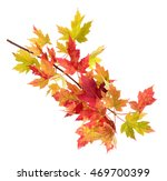 foliage of maple leaves on the... | Shutterstock . vector #469700399