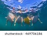 young girls in bikini have fun  ... | Shutterstock . vector #469706186
