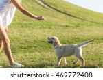 dog walking in the park with a...   Shutterstock . vector #469772408