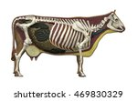 3d Illustration Of A Cow Basic...