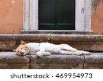 Cat In Greece   Corfu Island...