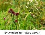 wild red flower