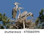 Three Grey Heron  Ardea Cinere...