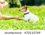 Stock photo jack russell dog with owner with high five paw and training outside and outdoors at the park or 470110769