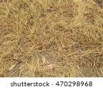 Herbicide Spray On Dry Grass....