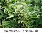 garden field of healthy... | Shutterstock . vector #470306810