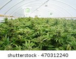 large indoor marijuana... | Shutterstock . vector #470312240