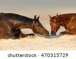 Two Beautidul  Horse Rest In...