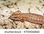 macro shot of a lizard. early... | Shutterstock . vector #470406860