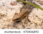 macro shot of a lizard. early... | Shutterstock . vector #470406893