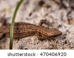 macro shot of a lizard. early... | Shutterstock . vector #470406920