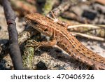 macro shot of a lizard. early... | Shutterstock . vector #470406926
