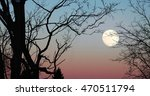 Trees And The Full Moon  Winte...