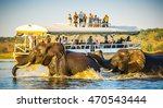 Small photo of African Elephants swimming across the Chobe River, Botswana with tourists on safari watching on