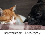 Stock photo cat and dog sleeping together snouts animals near 470569259
