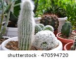 variety of cactus | Shutterstock . vector #470594720