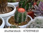 variety of cactus | Shutterstock . vector #470594810