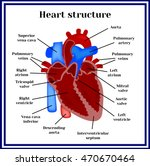 heart structure. the organ of... | Shutterstock .eps vector #470670464