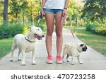 Stock photo teenage girl walking pet dogs pug dog and bull terrier in park on sunny summer day 470723258