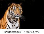 Small photo of close up a face Bengal Tiger