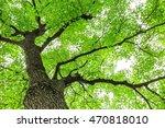 green sapium sebiferum tree... | Shutterstock . vector #470818010