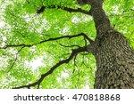 green sapium sebiferum tree... | Shutterstock . vector #470818868