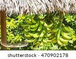 Banana Bunch Sold By Cuban...