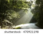morning rays in the deciduous... | Shutterstock . vector #470921198