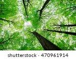 looking up into tall beech...   Shutterstock . vector #470961914