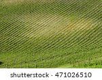 front view of a vineyard which... | Shutterstock . vector #471026510