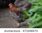 rooster or chickens on... | Shutterstock . vector #471048473