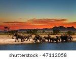 herd of elephants in african... | Shutterstock . vector #47112058