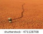 Snail Running Across Tennis...