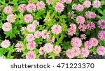 beautiful pink flower with... | Shutterstock . vector #471223370