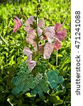 Small photo of Beaded blooming mallow in the grass, shallow DOF. Malva flower (hollyhock, Alcea rosea) made of beads