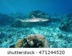 a whitetip reef shark ... | Shutterstock . vector #471244520