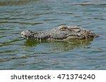 Nile Crocodile Swimming Throug...