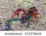 A Live Crawdad  Crayfish  Walk...