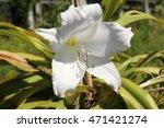 Hybrid White
