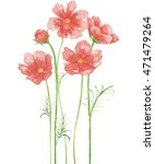 cosmos flower watercolor. | Shutterstock . vector #471479264