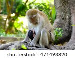 Mom And Baby Monkey Sits Under...