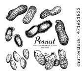 peanut   fruit vegetable vector ... | Shutterstock .eps vector #471631823