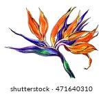 bird of paradise tropical... | Shutterstock . vector #471640310